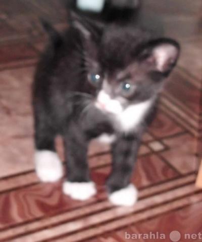 Отдам даром котята в Тюмени.