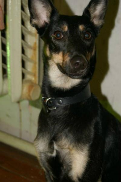 Отдам даром Собака в Тюмени.